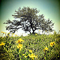 That Tree by Rick Wicker