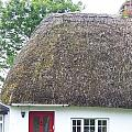 Thatched Roof Cottage With Red Door by Cathryn  Brown