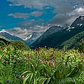 The Alpine Meadows by Olga Vlasenko