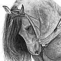 The Andalusian  by Bev Newcomer