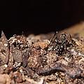 The Ant's Life by Venugopala Prabhu S