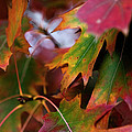 The Autumn Leaves by Lorraine Devon Wilke