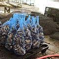 The Bags Of Blessings From The Ocean by Hiroko Sakai