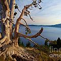 The Banks Of Crater Lake by Adam Jewell