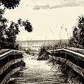 The Beach Path - Clearwater Beach by Bill Cannon