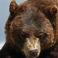 The Bear 2 by Ernie Echols