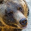 The Bear Head Shoot by Maik Tondeur