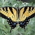 The Beauty Of A Butterfly by Living Color Photography Lorraine Lynch