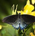The Beauty Of A Butterfly  by Saija  Lehtonen