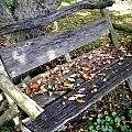 The Bench by Renate Nadi Wesley