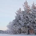 The Big Freeze by Odd Jeppesen