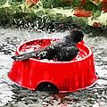 The Birdbath  by Steve Taylor