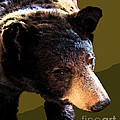 The Black Bear by Tammy Ishmael - Eizman