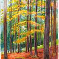 The Black Forest At Hinterzarten by Dai Wynn