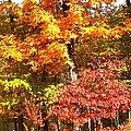 The Blaze Of Autumn by Mary Ann Southern