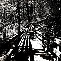 The Bridge Shadow by Regina McLeroy