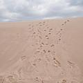 The Buffalo Dune by Guy Whiteley
