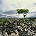 The Burren, On Kinvara Side, Co Clare by The Irish Image Collection