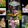 The Butterfly Collection by Paul Ward