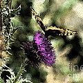 The Butterfly I by Donna Greene