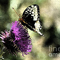 The Butterfly II by Donna Greene
