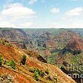 The Canyon by Bruce Borthwick