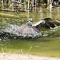 The Catch by Douglas Barnard