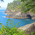 The Caves Of Cape Flattery  by Tikvah's Hope