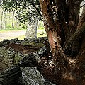 The Cedar by RL Rucker
