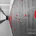 The Color Of Remembrance by Stav Stavit Zagron