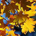 The Colors Of Autumn In Arizona  by Saija  Lehtonen
