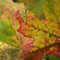 The Colors Of Fall  by Saija  Lehtonen