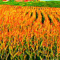 The Cornfield by Wingsdomain Art and Photography