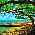 The Cove by Tom McKim