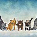 The Cute Ones by Jutta Maria Pusl