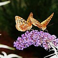 The Dancing Butterflies by Christy Bruna