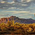 The Desert Golden Hour  by Saija  Lehtonen