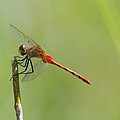 The Dragonfly Hangs On by Jeff Swan