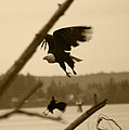 The Eagle Flies With The Crow by Kym Backland