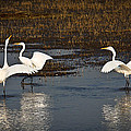 The Egrets by Steve McKinzie