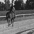 The Equestrian Trainer by Jennifer Sabir