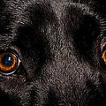The Eyes Have It by Cathy Smith