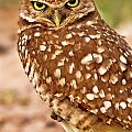 The Eyes Of A Burrowing Owl by Bill Dodsworth