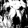 The Face In The Tree High Contrast by Annie Nelson