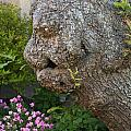 The Face In The Tree by Steve Purnell
