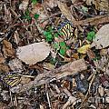 The Fallen Butterfly Wings by Joy Bradley