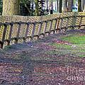 The Fence by Ausra Huntington nee Paulauskaite