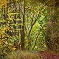 The Forest by Guido Montanes Castillo