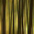 The Forest by Peggie Strachan