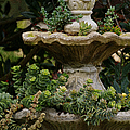 The Fountain Painterly by Ernie Echols